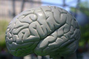 Cerveau sport à la télévision