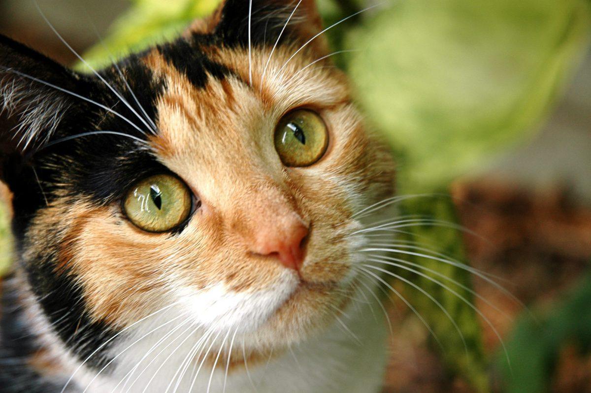 5 bonnes raisons de recevoir de l'amour et d'adopter un chat