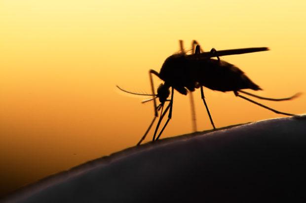 Découvrez les vertus vraiment efficaces des plantes anti-moustique