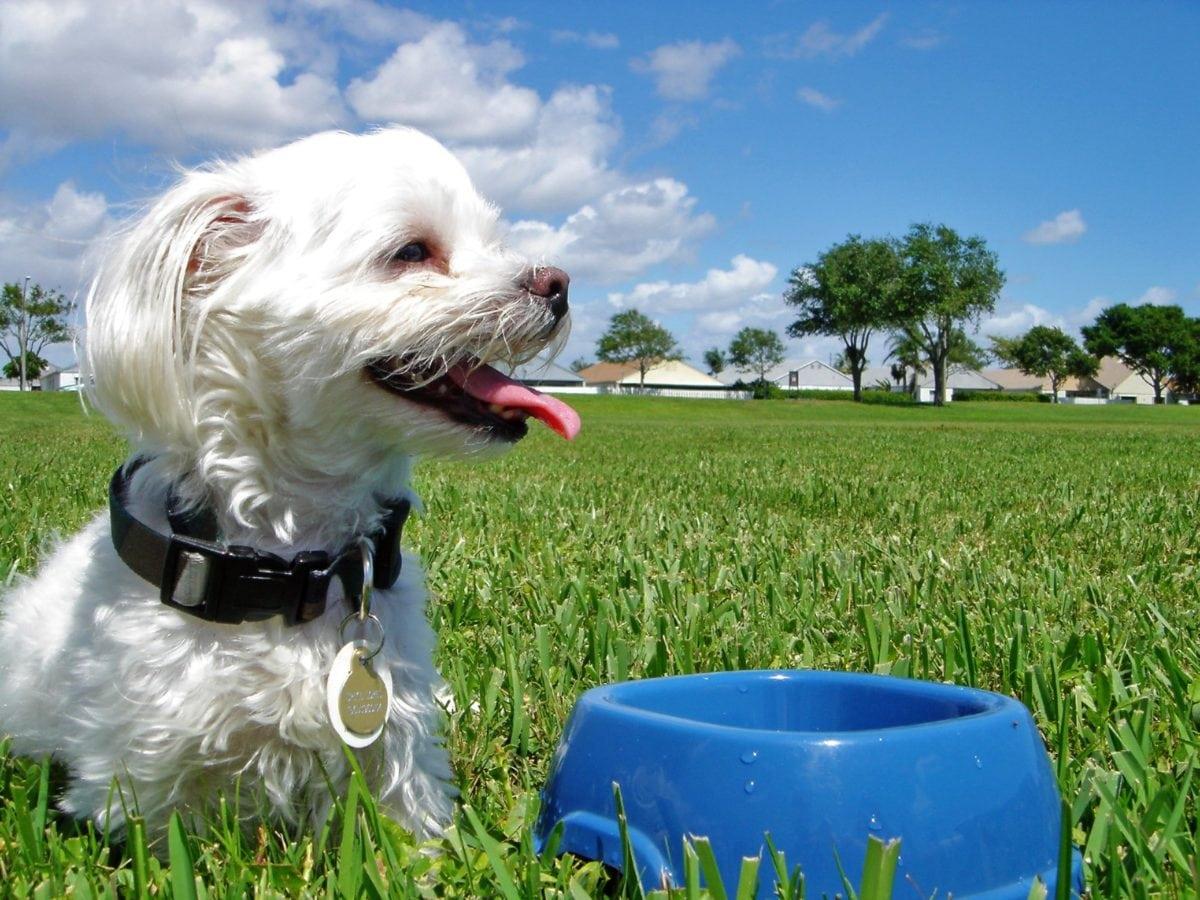 Découvrez la meilleure alimentation pour votre chien