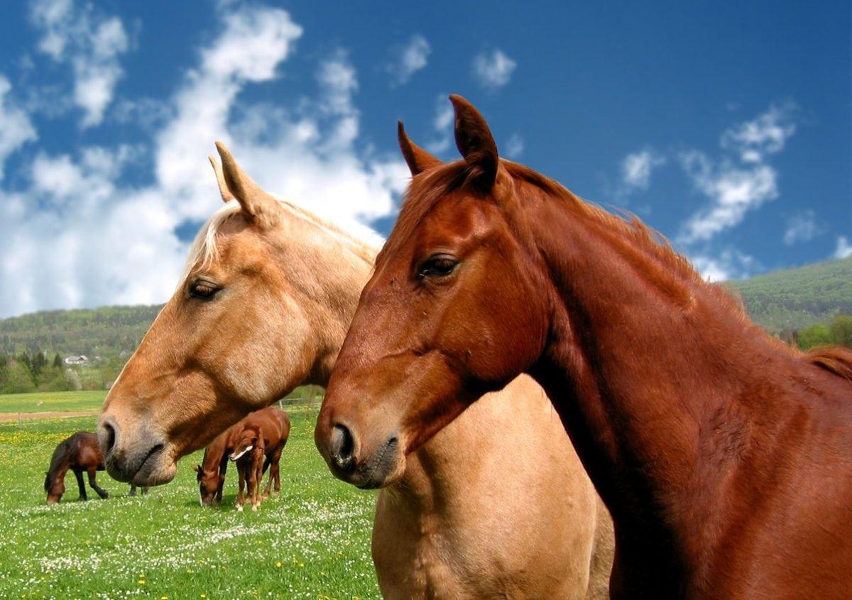 Comment bien soigner les dents de son cheval ?