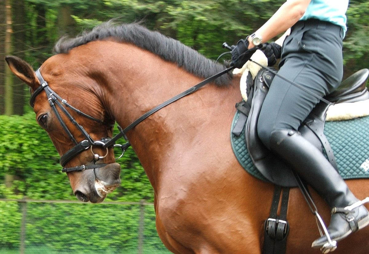 Comment choisir vos bottes pour bien monter à cheval ?