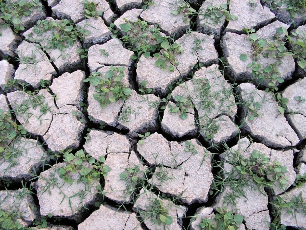 Découvrez les bienfaits méconnus de l'argile verte