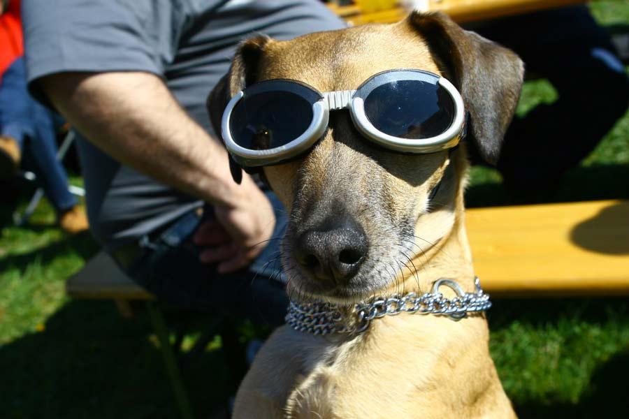 Comment bien choisir des lunettes de soleil ?