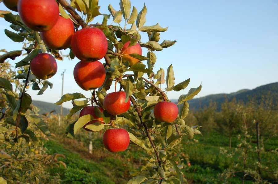 Découvrez les bienfaits de la permaculture